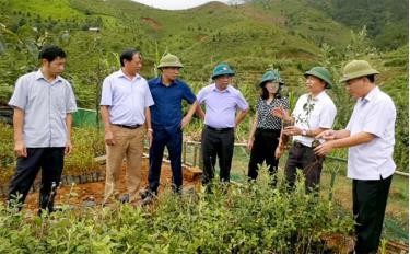 Đoàn giám sát của HĐND huyện Mù Cang Chải thực tế mô hình nhân giống cây sơn tra bằng phương pháp ghép cành tại xã Lao Chải.