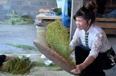 Cốm Tú Lệ, huyện Văn Chấn thơm dẻo được nhiều thực khách xa gần ưa chuộng.