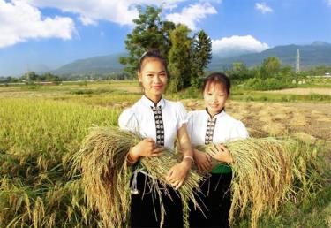 """Mường Lò - miền quê """"gạo trắng nước trong""""."""