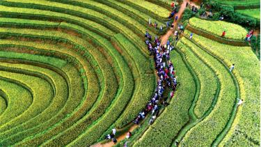 Du khách tham quan Danh thắng Quốc gia Ruộng bậc thang Mù Cang Chải mùa lúa chín.