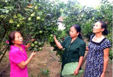 Bà Nguyễn Thị Năng (đứng giữa) cùng lãnh đạo Chi bộ thôn Thâm Pồng thăm mô hình phát triển kinh tế của hội viên nông dân.