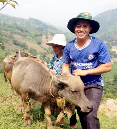 Mô hình chăn nuôi đại gia súc của gia đình anh Vàng A Rua ở thôn Tấu Trên, xã Trạm Tấu.