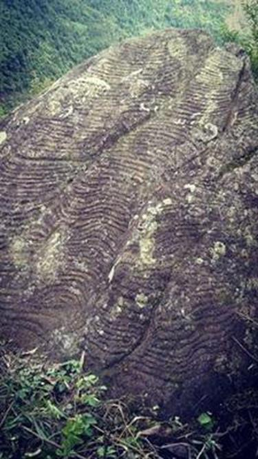 A rock fully covered with engravings of terraced fields.