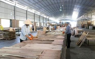 Sản xuất gỗ ván ép ở Văn Yên.