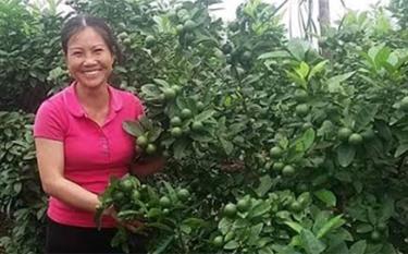 Mô hình phát triển kinh tế của gia đình chị Đoàn Thị Hiên cho thu nhập cao.