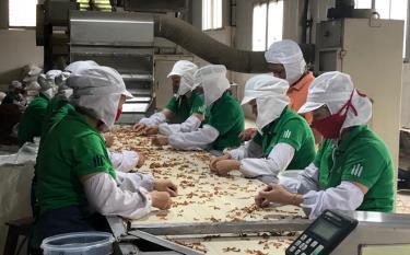 Các doanh nghiệp trên địa bàn huyện Yên Bình đẩy mạnh sản xuất, nâng cao giá trị sản phẩm trong điều kiện bình thường mới, góp phần tăng thu ngân sách địa phương.