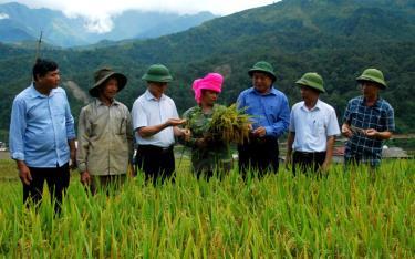 Lãnh đạo huyện Trạm Tấu kiểm tra chất lượng, năng suất lúa tại xã Hát Lừu.