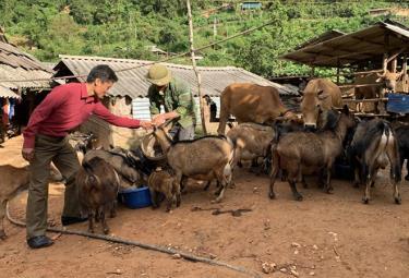 Mô hình kinh tế của anh Giàng A Câu, bản Hồ Nhì Pá, xã Lao Chải, huyện Mù Cang Chải cho hiệu quả cao.