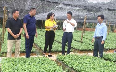Tổ hợp tác ươm cây giống của một số hộ trong thôn Trấn Ninh cho hiệu quả kinh tế cao.