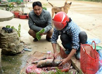 Bình quân mỗi ngày, chị Vũ Thị Liên bán được thêm khoảng 10 kg cá các loại so với trước khi giá thịt lợn tăng cao.