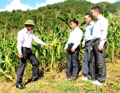 Cán bộ nông nghiệp huyện Trạm Tấu kiểm tra mô hình canh tác ngô bền vững trên đất dốc.
