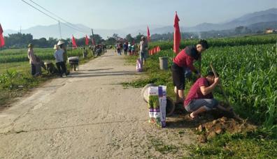 """Mô hình """"Hàng cây nông dân"""" của Hội Nông dân thị xã Nghĩa Lộ được nhân rộng trên các tuyến đường."""